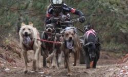 Dog Power 05 credit Maximilian Eckmann